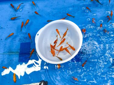 奈良・お寺以外のおすすめ観光スポット金魚すくい道場「こちくや」とは?